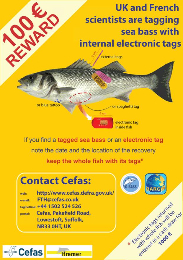 Return tagged Sea Bass for a reward