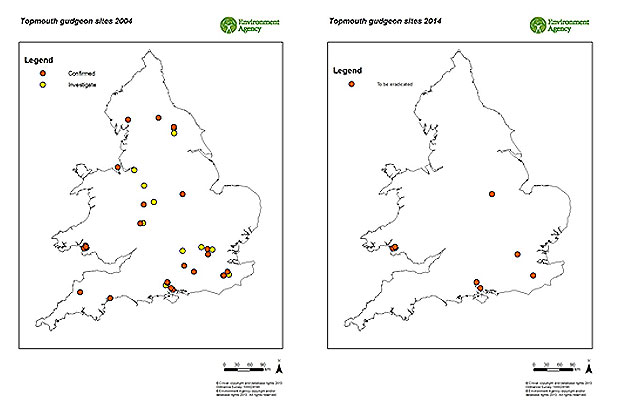 Maps showing locations of topmouth gudgeon