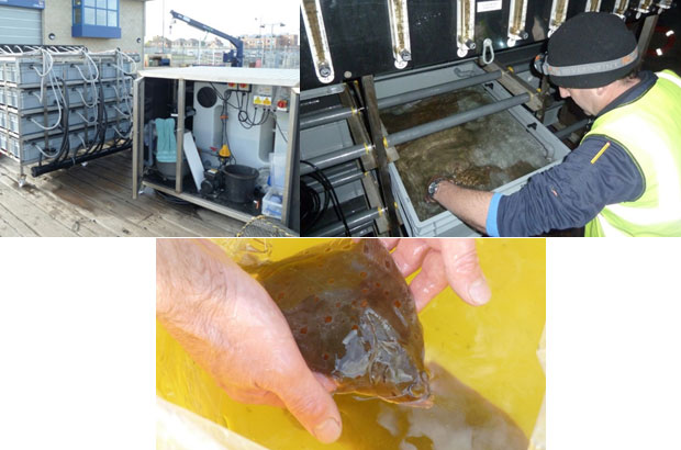 Aquaria equipment, Peter checking fish and a health fish