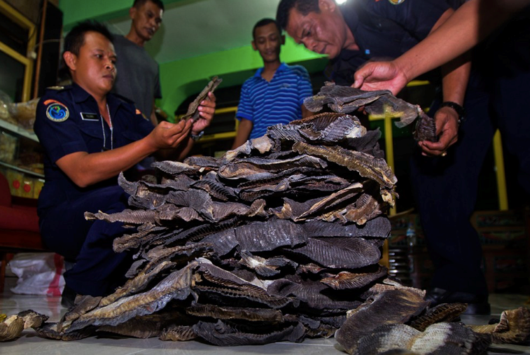 inspectors looking at a pile of shark products