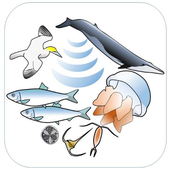 a graphic representation of underwater sea creatures