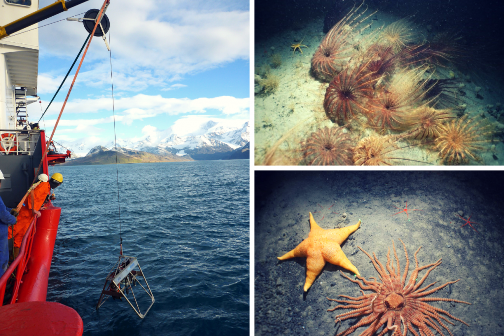 Left shows a photo of crew testing the deep-water camera system off Cumberland Bay, South Georgia during the last marine survey aboard the MV Pharos SG in April 2018. The camera is being lowered into the water. On the right are images of sea lilies and two different types of starfish taken around 260 m depth using the underwater camera system.