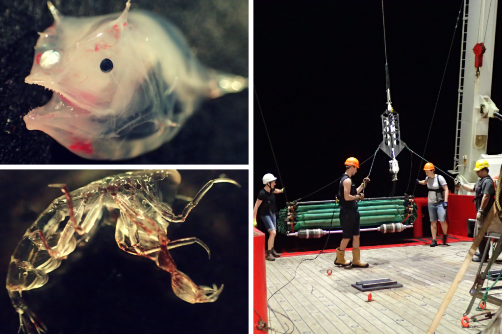 Right: 4 people hauling in the nets on the ship during the last Blue Belt marine expedition in 2018. Left: some of the unusual underwater animals caught in mid-water trawls around St Helena.