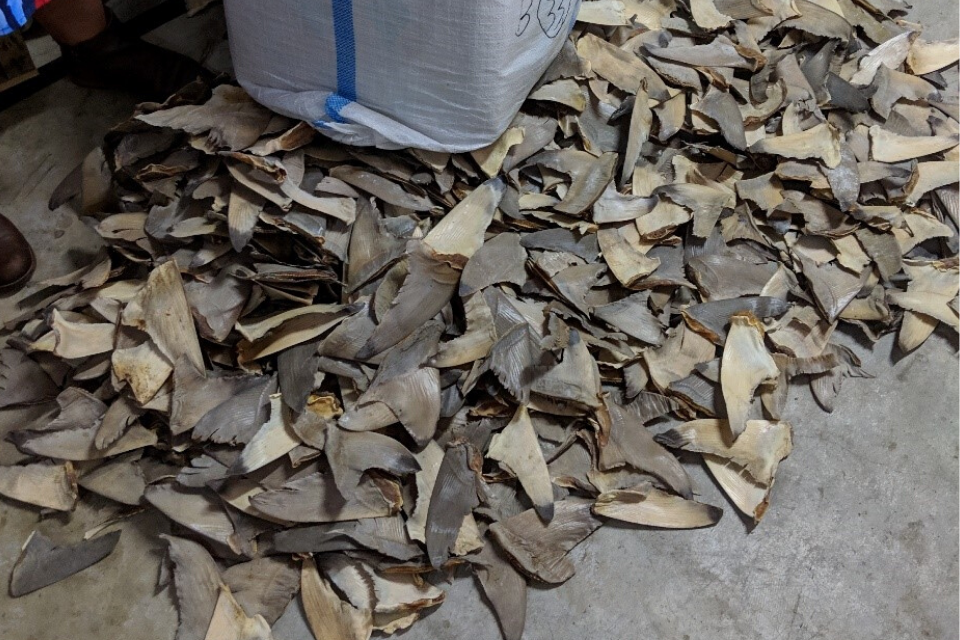 shark products and fins scattered on the floor