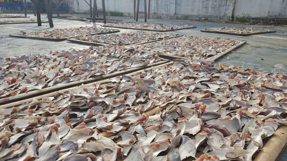 shark fins across the ground