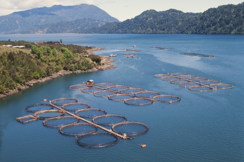 Aerial view of Salmon farm