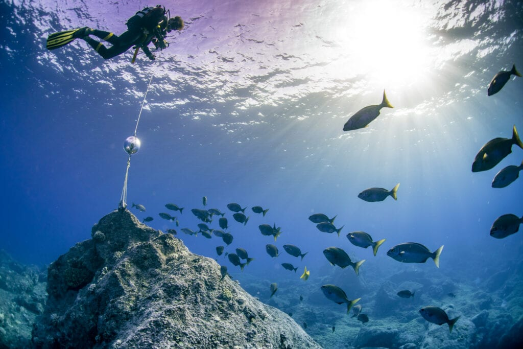 Surveying coral reefs Pitcairn Islands