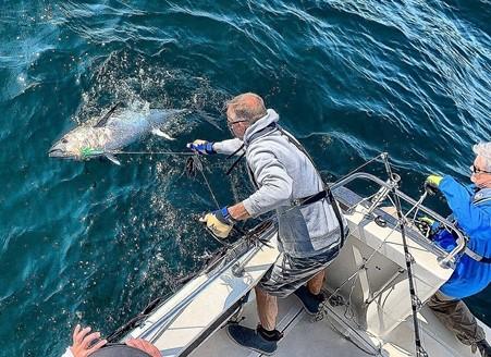 Catching a Bluefin Tuna